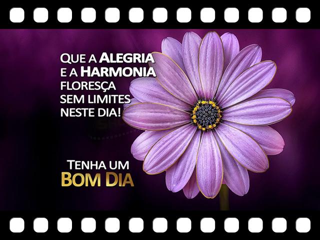 Que a Alegria e a Harmoniza flores�a sem limites neste dia! ShowdeFotos.com (Mensagens Animadas)