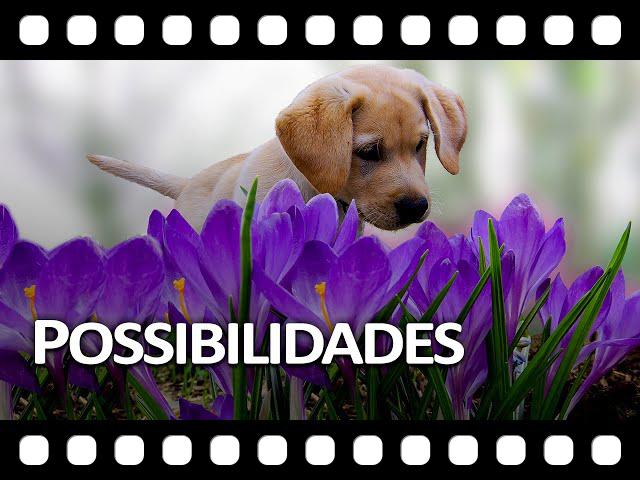 Possibilidades - Acredite que um novo dia pode te surpreender!
